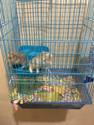 Hamster cage for Sale in Los Angeles, CA