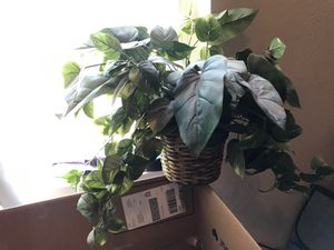 Fake plant for Sale in Chandler, AZ