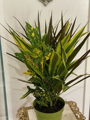 Indoor house plant mix for Sale in Los Angeles, CA
