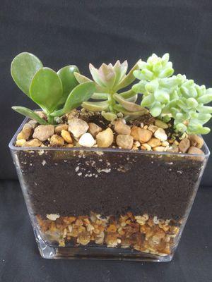 Little J's mini Gardens for Sale in Gulfport, FL