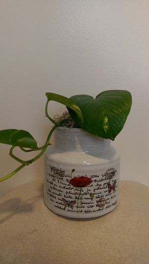 Mother's Day Air Cleaning Vine Plant In Butterfly Ceramic Pot for Sale in Virginia Beach, VA