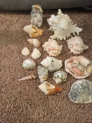 Sea shells for Sale in Pittsburgh, PA
