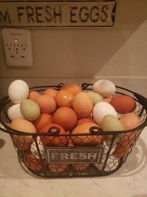 Organic eggs, 4dlls a dozen for Sale in Lubbock, TX