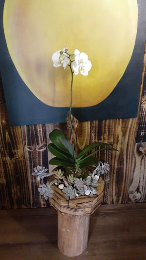 Succulent and orchid for Sale in Pembroke Pines, FL