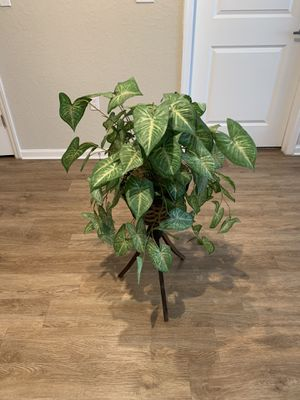 PLANT STAND PLANT INCLUDED for Sale in Riverview, FL