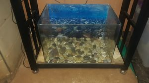 15 gallon rimless tank for Sale in Wahiawa, HI