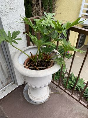 Plant for Sale in Huntington Beach, CA