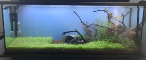 Planted Aquarium For Sale for Sale in Seattle, WA
