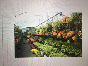 Garden Mart style green house for sale for Sale in Elmhurst, IL