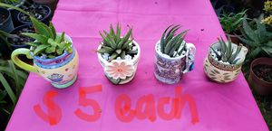 Plants for sale !!! $5 and up. Pick up only. for Sale in Citrus Heights, CA