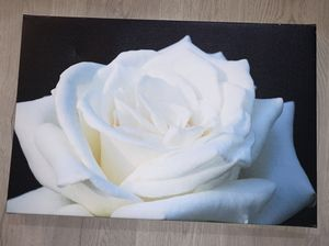 ROSE CANVAS for Sale in Soquel, CA