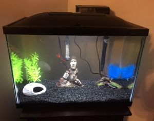 20 gallon marine land fish tank for Sale in Pittsburgh, PA