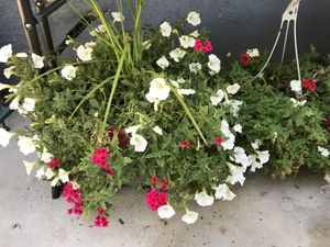 Plant sale for Sale in Las Vegas, NV