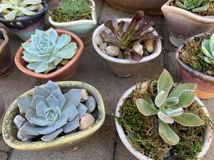 Assorted succulent plants in a beautiful ceramic pots $7. each for Sale in Los Alamitos, CA