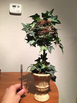 Mid sized house plant in clay pot for Sale in Lexington, KY