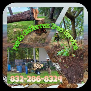 #Trees #Safety #Local #Hurricane season for Sale in Stagecoach, TX