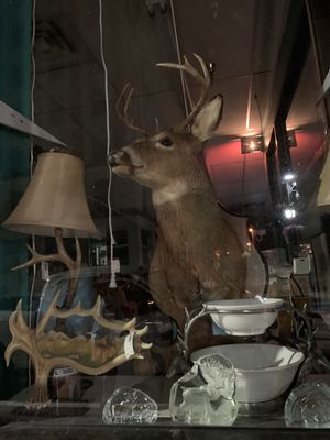 Backyard, barnyard, jungle or zoo~ we have animal decor for you!! for Sale in Clarksburg, WV