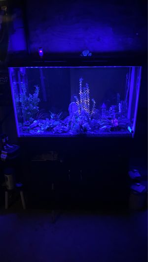 45 gal fish tank and filterAnd all the trimmings for Sale in Tabernacle, NJ