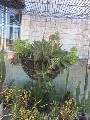 Rustic hanging centerpiece with succulent and Cactus for Sale in Fontana, CA