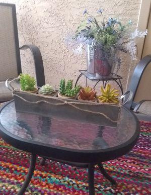 Succulents for Sale in Phoenix, AZ