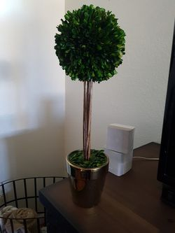 Small topiary for Sale in Phoenix,  AZ