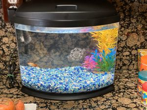 AWUEON FISH TANK WITH FISH AND DECORATIONS AND FOOD for Sale in Fontana, CA