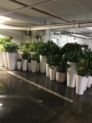 100 Plus Plant Pots and Soil. DESIGNER Pots from a famous South Beach hotel. 2 Ft to 5 Ft- selling per plant but will give a discount on bulk order for Sale in Orlando, FL