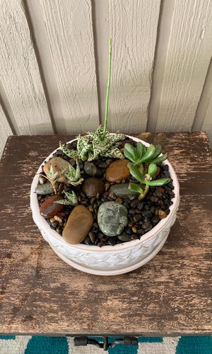 Cactuses and succulents for Sale in Clackamas, OR