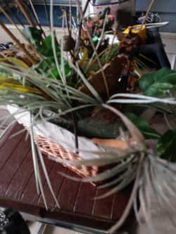 Plant Fake for Sale in Lantana,  FL