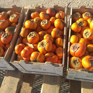 Persimmons Sale for Sale in Fresno, CA