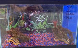 Aquarium for Sale in Largo, FL