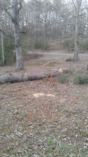 free firewood for Sale in Benton, AR