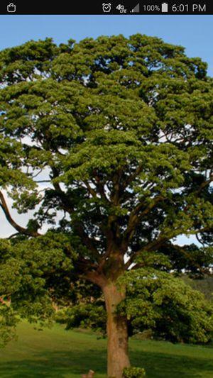 Tree services for Sale in Pawhuska, OK