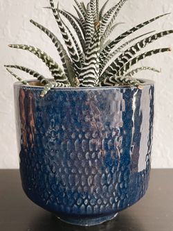 Small Potted Plant with Blue Pot for Sale in Los Angeles,  CA
