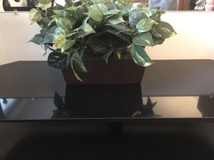 Moving sale! Fake plant for Sale in Coon Rapids, MN
