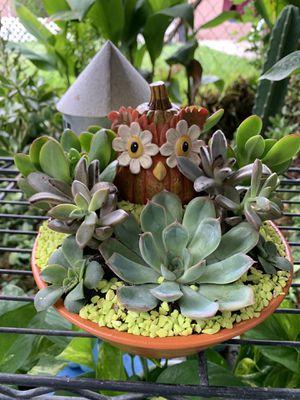 Succulent en casuelita de barro pequeña mide 9 inche de diámetro for Sale in Bell, CA