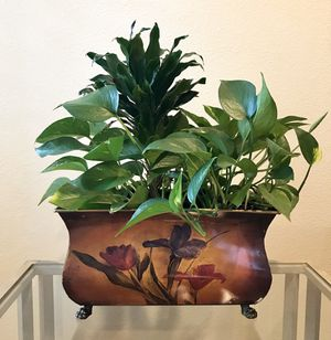 Beautiful pot holder with beautiful real plant. for Sale in Folsom, CA