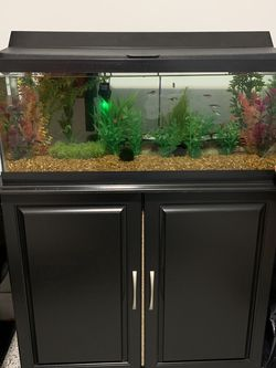 20 Gallon Long Aquarium with Stand for Sale in Chicago,  IL