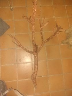 Copper Painted Cholla Cactus Skeleton for Sale in Glendale,  AZ