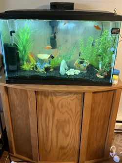 Well Established 29 Gallon With stand for Sale in Seattle,  WA