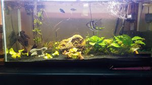 40gal long tank for Sale in Clackamas, OR
