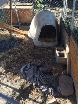 Dog house for Sale in Garner, NC