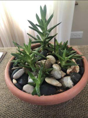 Succulent terrarium for Sale in Chicago, IL