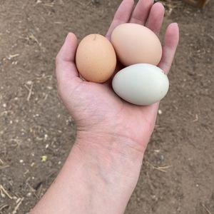 Farm Fresh Eggs for Sale in Hesperia, CA