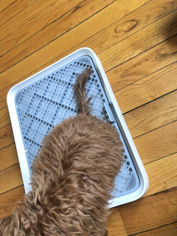 Pet Kit Dog Training potty