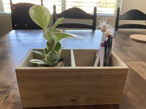 Variegated Peperomia plant with pen holder for Sale in Las Vegas, NV