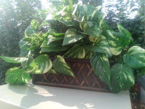 Fake plants decoration for Sale in Bensenville, IL