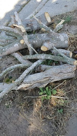 FREE Firewood for Sale in Lompoc, CA