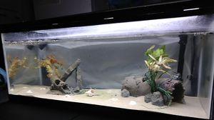 20 Gallon Fish Aquarium for Sale in San Jacinto, CA