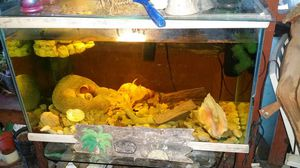 50 gal aquarium for Sale in Gibsonton, FL